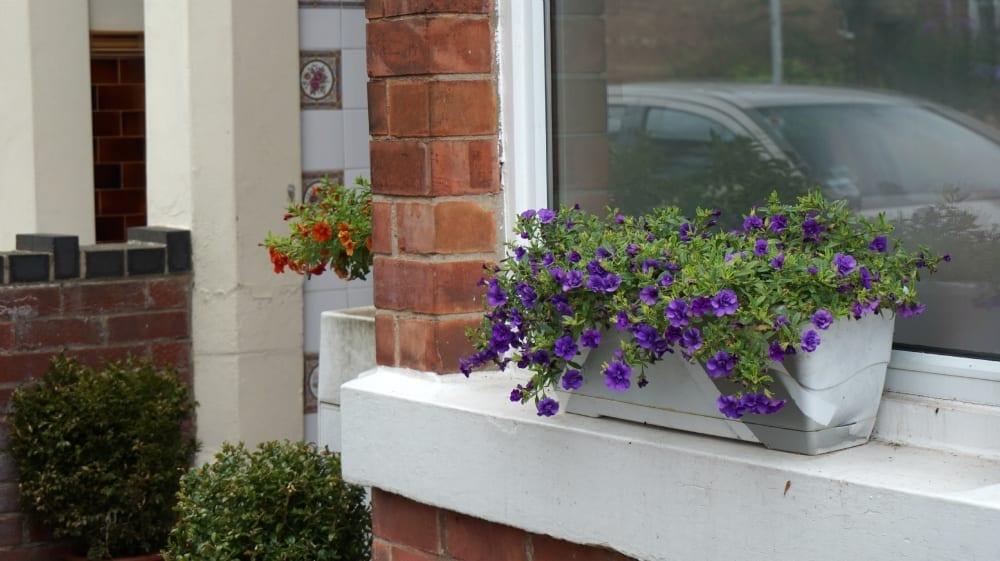 Window boxes 1
