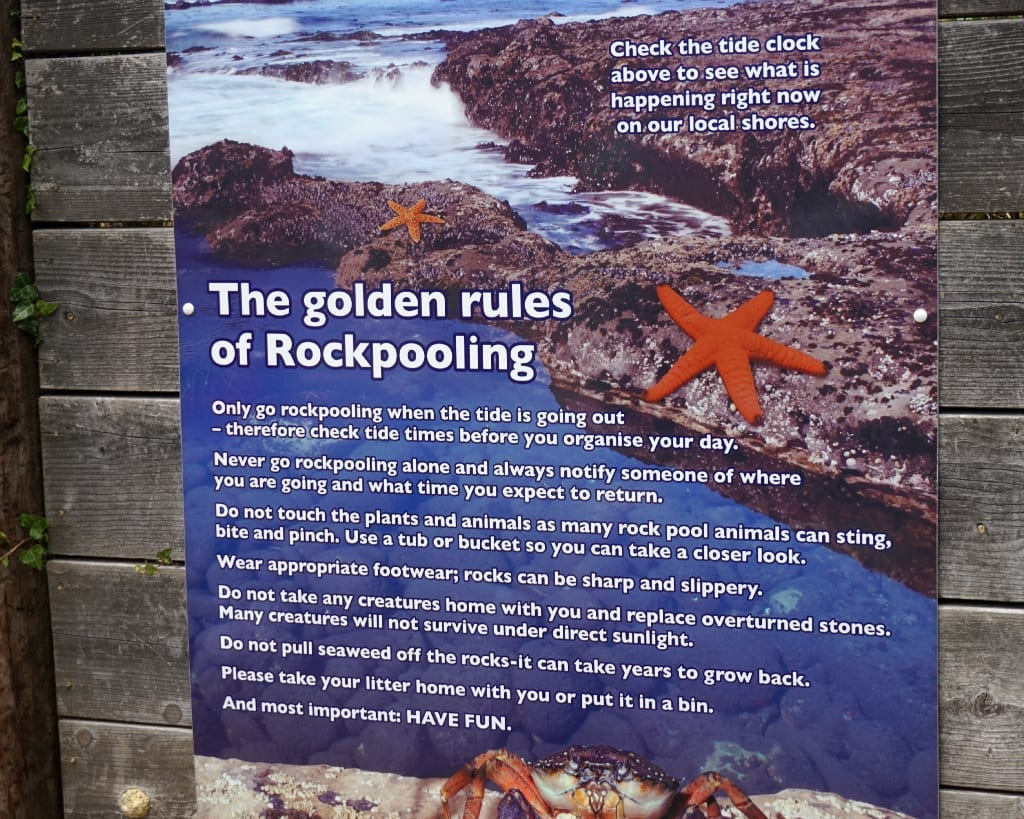 Rockpooling tips