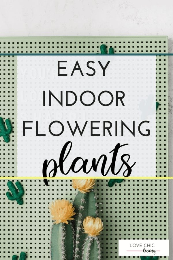 Ideas for easy to grow indoor flowering plants #indoorgarden #indoorplants #floweringplants #indoorfloweringplants #lovechicliving