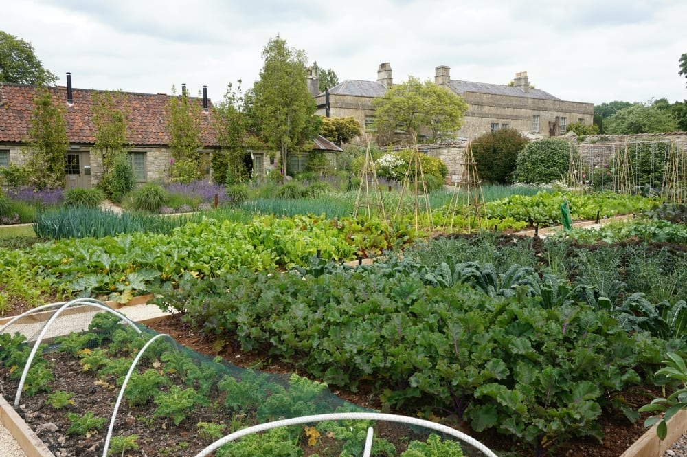 The Pig near Bath gardens