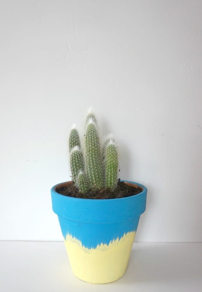 DIY Cactus planter