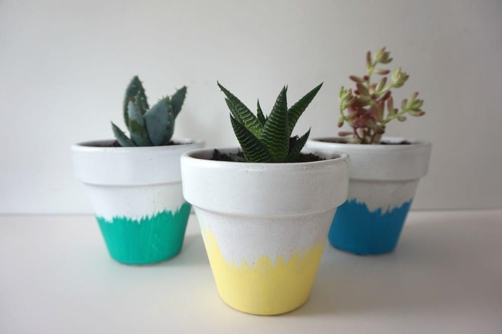 DIY Succulent planters selection
