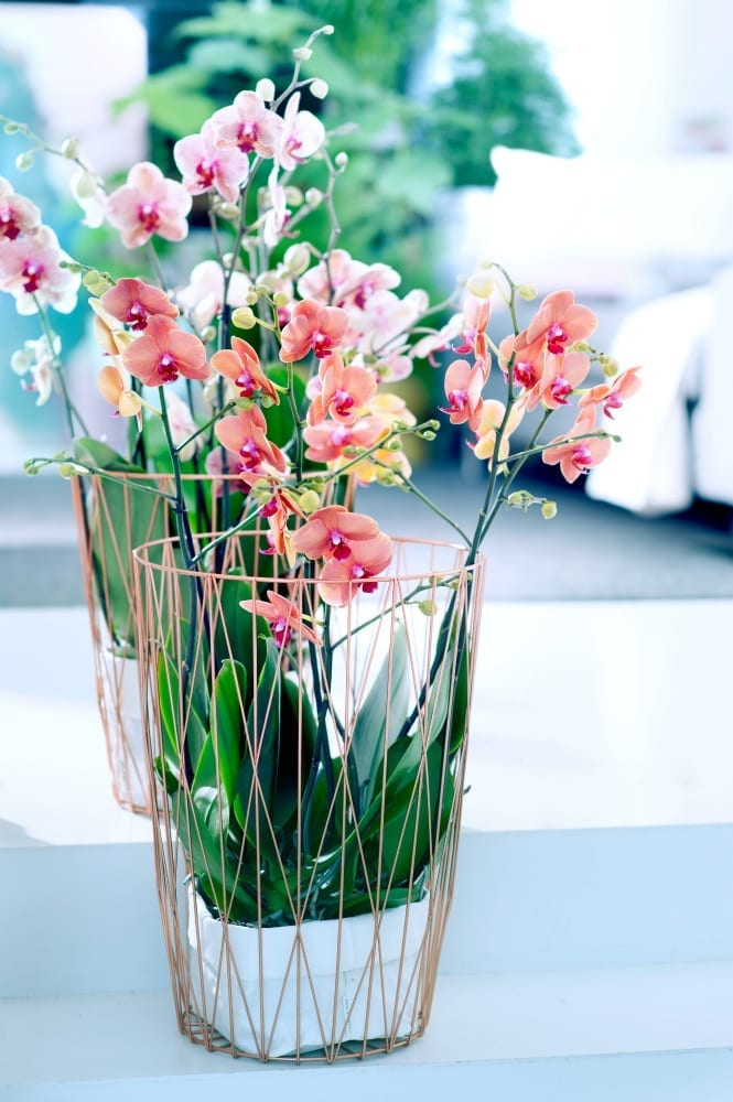 How to style your home with orchids