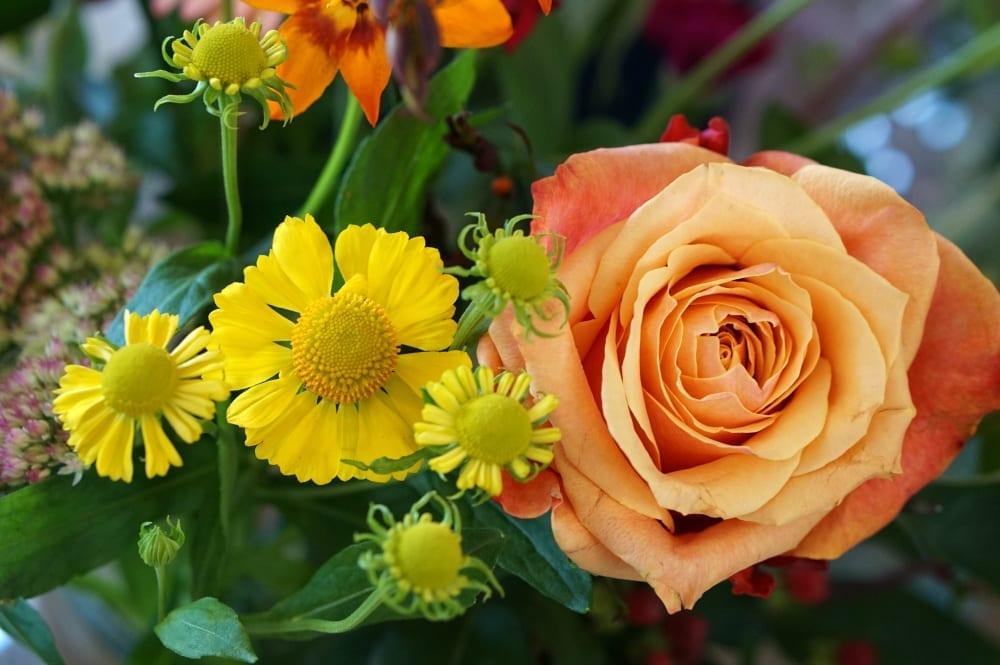 bloomon-flowers-rose