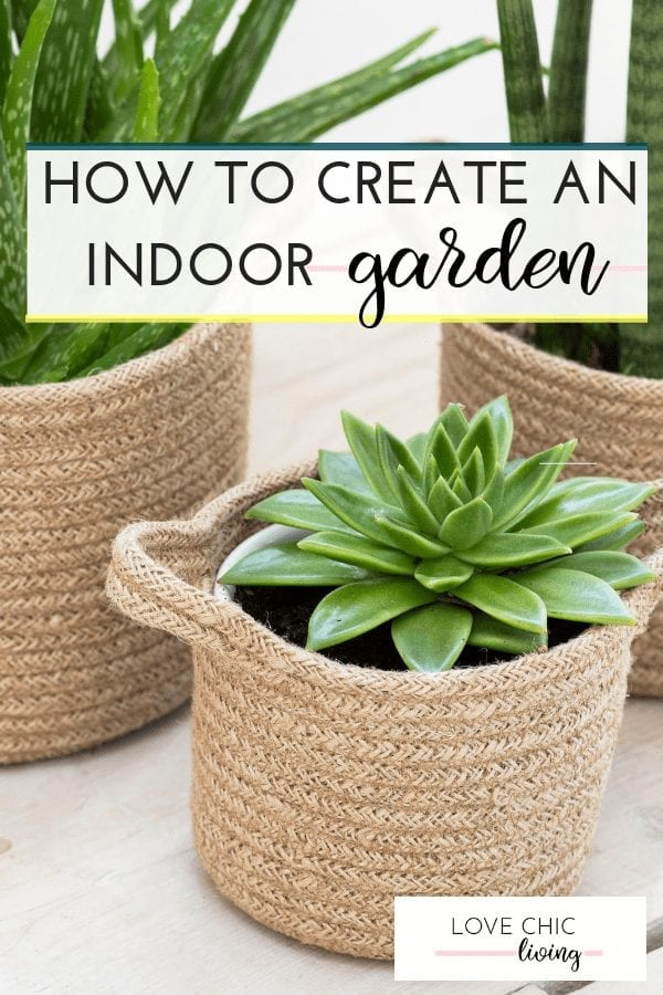 Everything you need to know about indoor gardening and how to grow fruit, vegetables and plants indoors. #indoorgarden #indoorgardening #indoorplant #indoorveg #lovechicliving