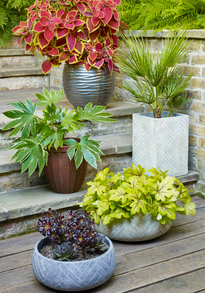 A selection of garden plant containers with low maintenance plants